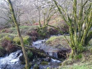 Tree-lined stream valley