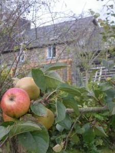 Gorfanc's apples