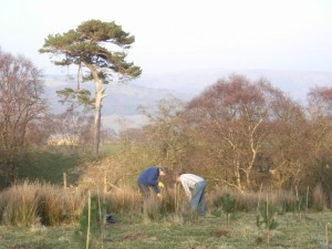 Planting trees in 2009