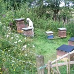 The Gorfanc apiary