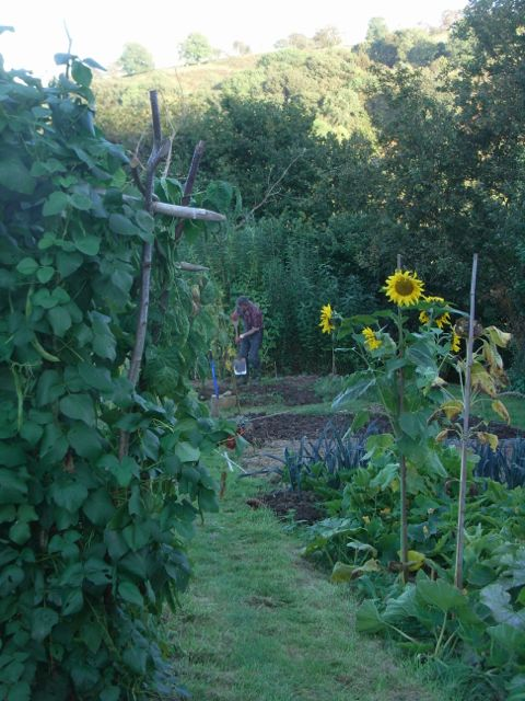 The organic garden at Gorfanc